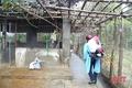 Xuất hiện dịch tả lợn châu Phi sau lũ, Cẩm Xuyên gấp rút ngăn chặn