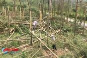 Cẩn trọng với nguy cơ cháy rừng sau bão