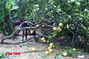 Hà Tĩnh đề nghị Trung ương hỗ trợ giống cây trồng khắc phục hậu quả bão số 10