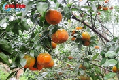 Lễ hội cam và các sản phẩm nông nghiệp Hà Tĩnh diễn ra cuối tháng 11
