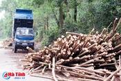 """Tận thu gỗ rừng trồng sau bão - Cần """"dám chịu trách nhiệm""""!"""