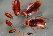"""Kiến, muỗi, gián tấn công: Sử dụng ngay 3 """"chiêu"""" cực hiệu quả này nhé"""