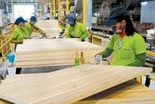 Hà Tĩnh đồng ý chủ trương đầu tư Nhà máy chế biến gỗ hơn 2.100 tỷ đồng tại KKT Vũng Áng