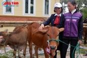 Agribank hỗ trợ 132 con bò cho người nghèo Hà Tĩnh