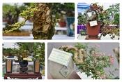 Ngắm bonsai mini giá đắt đỏ