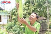Khám phá khu vườn mẫu đạt giải A của cán bộ tư pháp Thạch Tân
