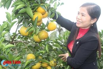 Vũ Quang sẽ thu hàng trăm tỷ nhờ cam được mùa, giá cao