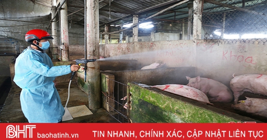 3 huyện ở Hà Tĩnh tái phát dịch tả lợn châu Phi