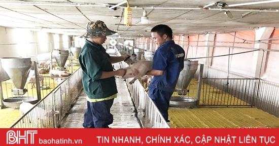 Các HTXở Hà Tĩnh học cách bảo vệ môi trường để phát triển chăn nuôi lợn bền vững