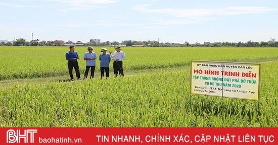 Cụ thể hóa Nghị quyết Đại hội Đảng bộ huyện, Can Lộc đẩy mạnh sản xuất lúa hàng hóa, quy mô lớn