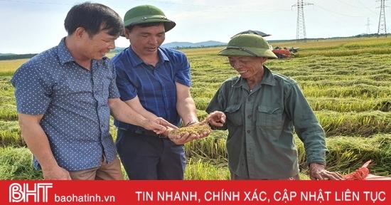 """Gieo đúng lịch, cơ giới hóa trong sản xuất, huyện Kỳ Anh """"về đích"""" thu hoạch lúa hè thu"""
