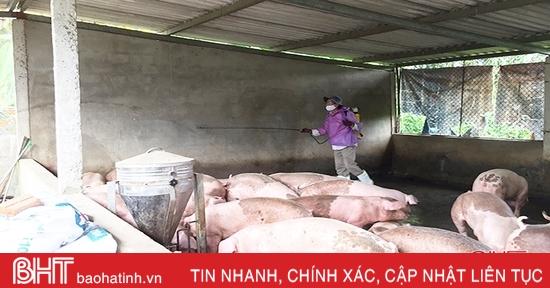Hà Tĩnh: 25 xã, phường, thị trấn có dịch tả lợn châu Phi chưa qua 21 ngày