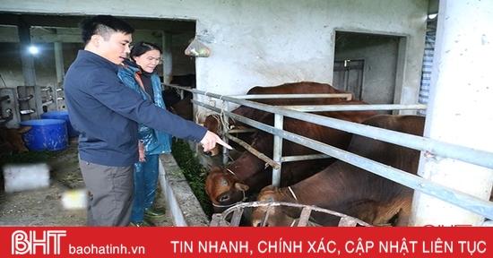 Hà Tĩnh ban hành công điện chỉ đạo tăng cường phòng chống đói, rét, dịch bệnh cho vật nuôi