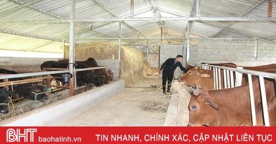 Hà Tĩnh chủ động phòng ngừa, khoanh vùng dịch bệnh viêm da nổi cục trên trâu, bò