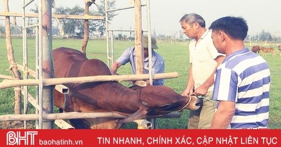 Hà Tĩnh: Hơn 1,5 triệu con gia súc, gia cầm sẽ được tiêm phòng đợt 2/2020