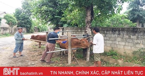 Hà Tĩnh phân bổ hơn 980 ngàn liều vắc-xin tiêm phòng gia súc, gia cầm