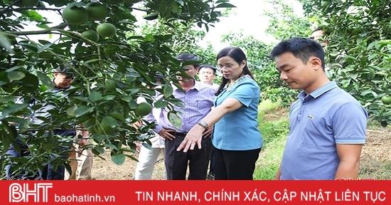 Hà Tĩnh tạo điều kiện kết nối cung cầu, tiêu thụ nông sản Hà Giang