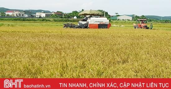 """Hiệu quả kinh tế tăng 15 - 20% từ những cánh đồng """"4 cùng"""" ở Hà Tĩnh"""