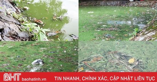 """""""Hồ Gươm thu nhỏ"""" ở phố núi Hà Tĩnh vẫn ô nhiễm nặng, mất tác dụng điều hòa"""