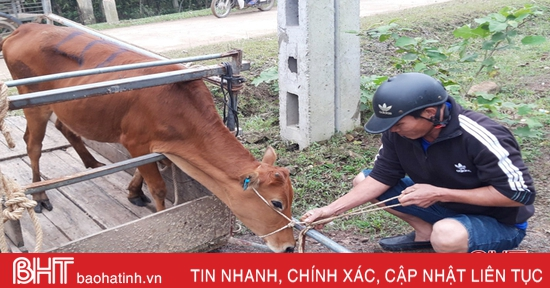 Hỗ trợ 28 con bò giống trị giá 420 triệu đồng cho người dân miền núi Hương Khê