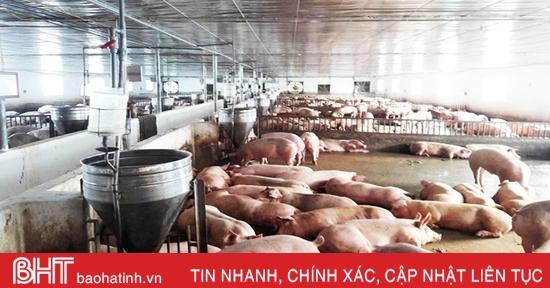 Hương Sơn đình chỉ 10 cơ sở chăn nuôi lợn không đảm bảo môi trường