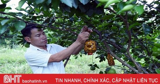 Khởi nghiệp chỉ với 10 triệu đồng, anh nông dân Hà Tĩnh sở hữu trang trại cho lợi nhuận hơn 2 tỷ mỗi năm