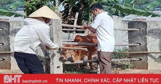Khống chế bệnh lở mồm long móng trên gia súc ở xã ven biển Hà Tĩnh