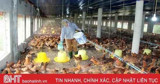 Kinh tế tập thể ở Lộc Hà mỗi năm doanh thu gần 350 tỷ đồng