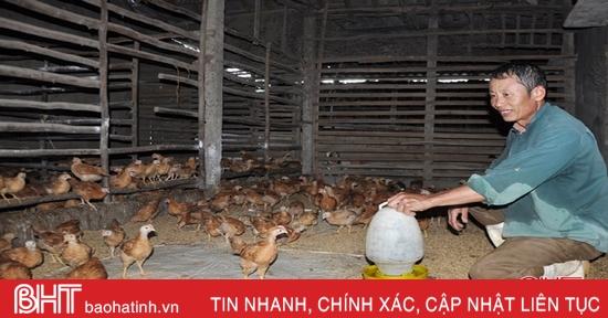 """""""Né"""" dịch tả lợn châu Phi, nông dân Hà Tĩnh tăng nuôi gà đón tết"""