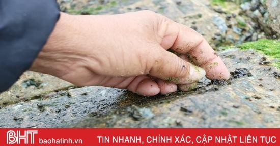 Ngư dân Hà Tĩnh cào rong biển kiếm tiền triệu mỗi ngày