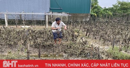 Người dân làng rau ven đô Hà Tĩnh trắng tay trước mùa thu hoạch