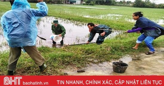 Người dân Lộc Hà ra quân diệt hơn 45 ngàn con chuột, bảo vệ mùa màng
