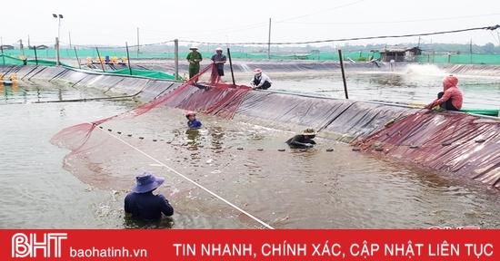 """Người nuôi trồng thủy sản Lộc Hà """"trắng tay"""" sau trận lũ lịch sử"""