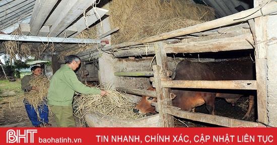 Nhiệt độ xuống 10 độ C, nông dân vùng cao Hà Tĩnh lo giữ ấm cho đàn vật nuôi