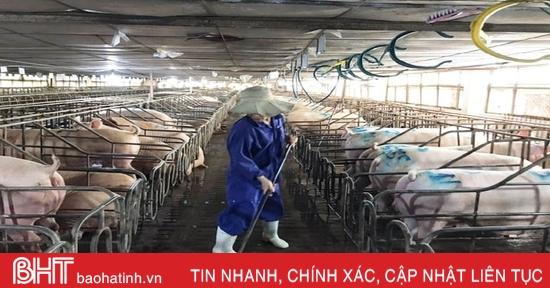 """""""Nội bất xuất, ngoại bất nhập"""", các trang trại ở Hà Tĩnh siết chặt phòng dịch tả lợn Châu Phi"""