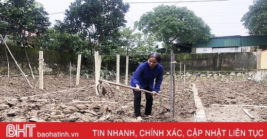 Nông dân Đức Thọ sửa sang lại vườn tược, khôi phục sản xuất