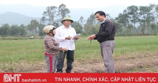 """Nông dân Thiên Lộc nỗ lực """"cứu"""" hơn 100 ha hành tăm"""