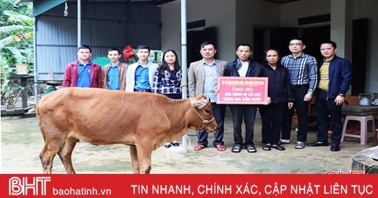 Sở Tài chính hỗ trợ bò giống cho gia đình bị thiệt hại do lũ lụt