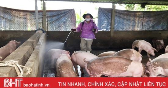 Tăng khả năng phòng vệ trước dịch tả lợn châu Phi ở huyện miền núi Hà Tĩnh