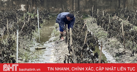 Vựa rau lớn nhất Hà Tĩnh tan hoang sau mưa lũ